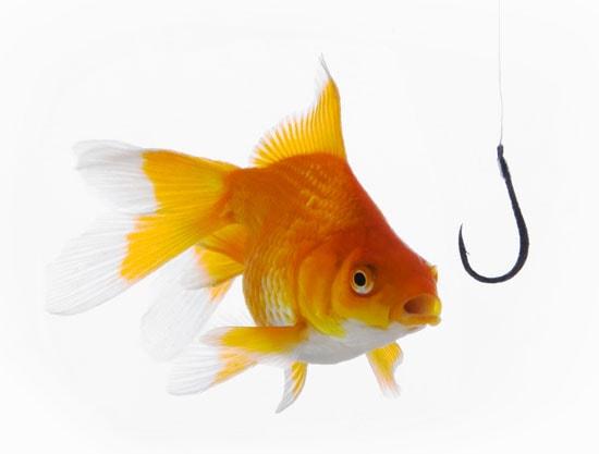 begiv dig ud på en fiskerejse