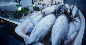 Forskel på lystfiskeri og erhvervsfiskeri